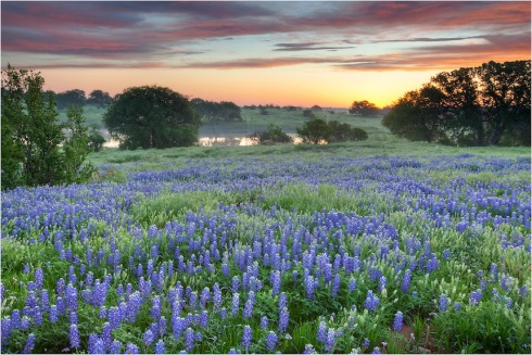 Bluebonnet-Sunrise-on-a-Country-Road-in-the-Texas-Hill-Country